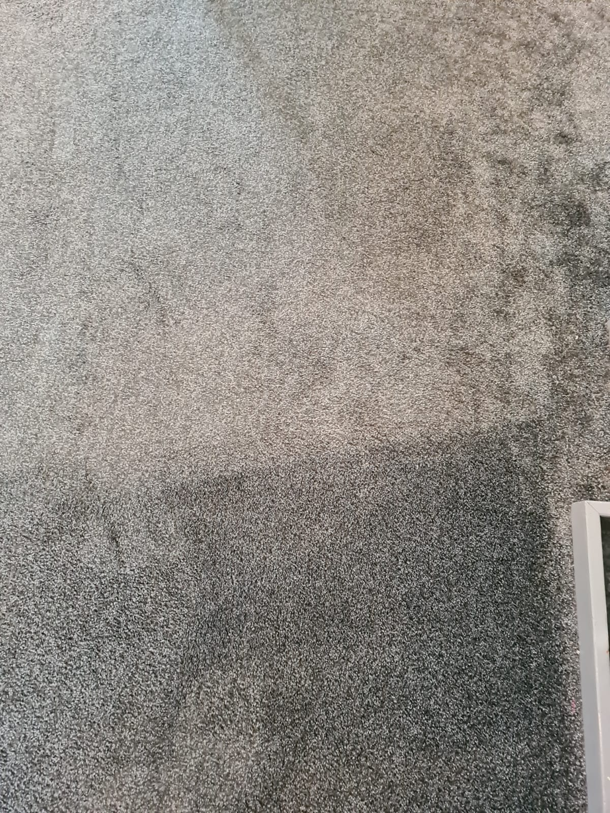 Carpet Cleaning Morley. PCC (2)